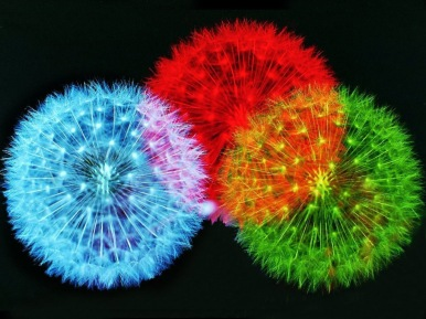 color-fireworks